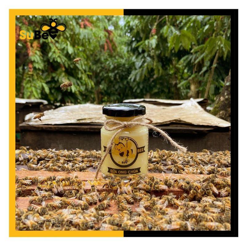 Sữa ong chúa là thực phẩm vàng có lợi ích cả về sức khỏe và sắc đẹp