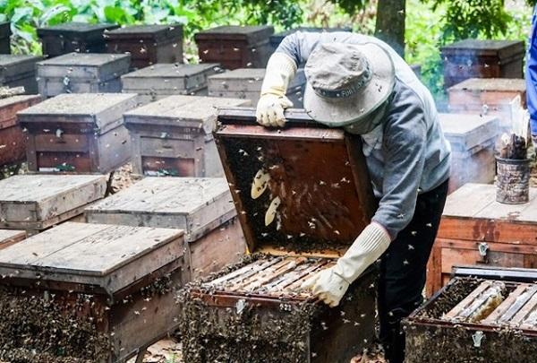 chống bán phá giá mật ong Việt Nam