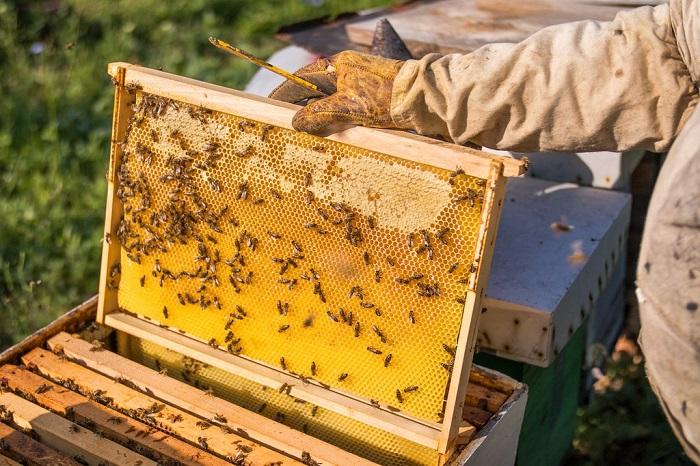 giá mật ong nuôi