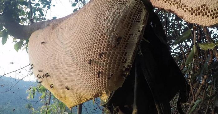 mật ong khoái
