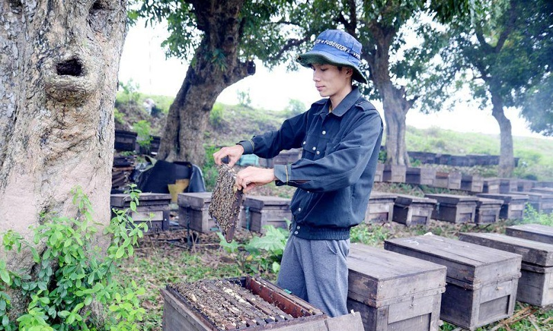 nuôi ong lấy mật