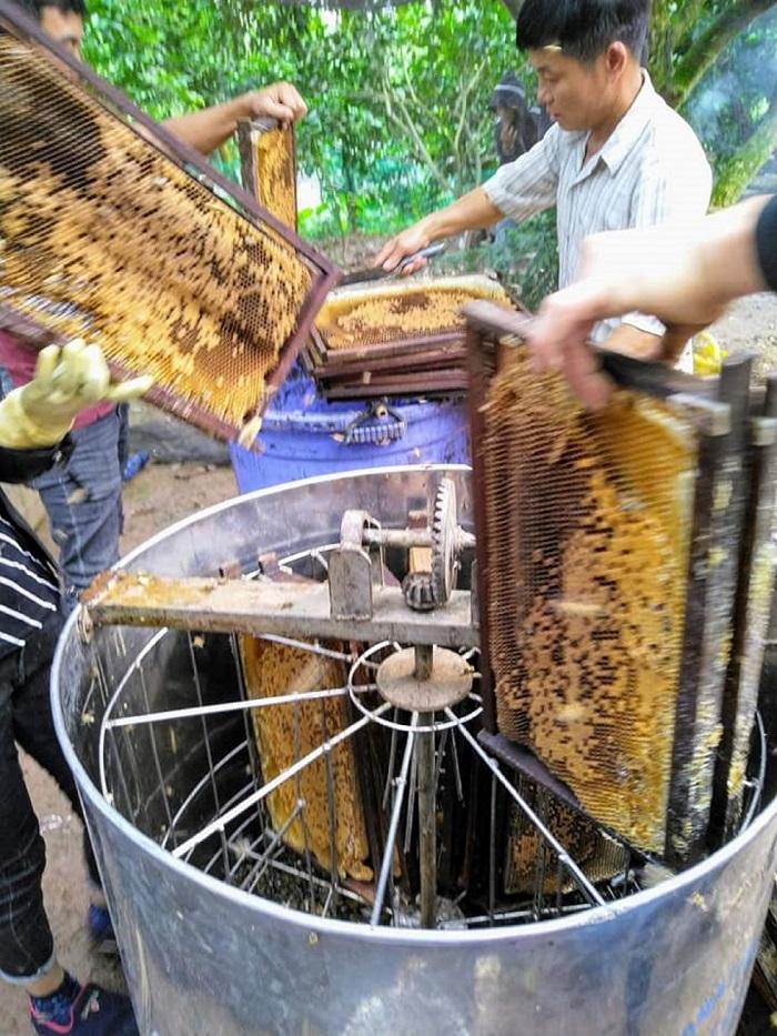 thu hoạch mật ong