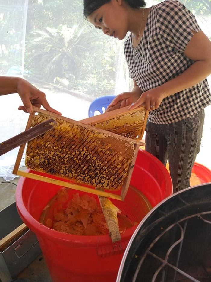 mùa thu hoạch mật ong