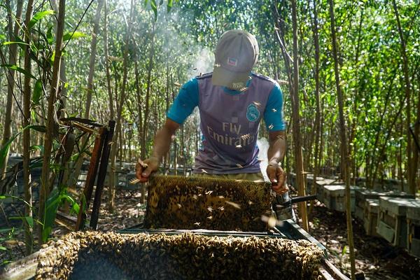 mật ong hoa tràm nguyên chất bao nhiêu 1 lít