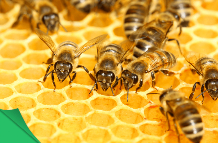 những điều bất ngờ về mật ong