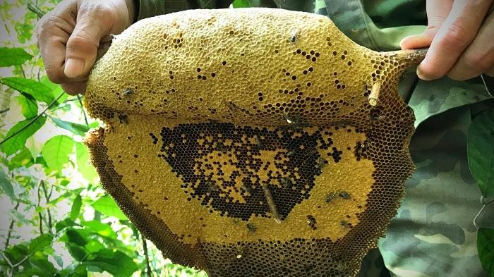 tác dụng của mật ong ruồi